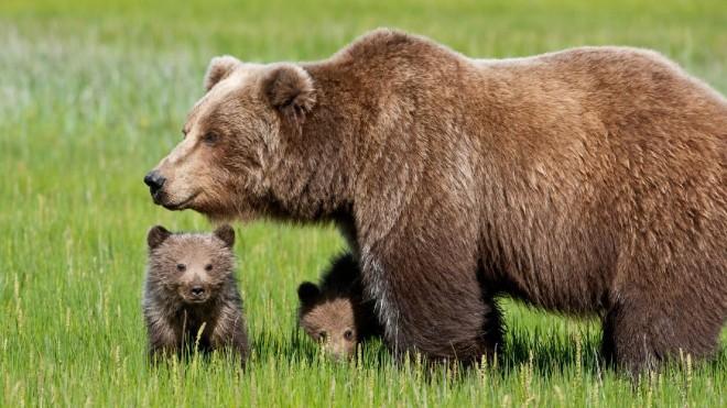 61 Le ragioni dell'animalismo