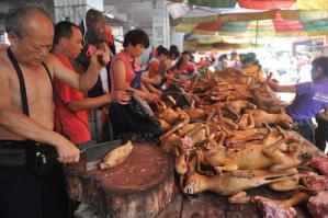 Macellazione di cani a Yulin
